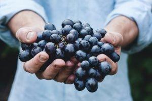 vin-bio-vin-biodynamique-vin-naturel-quelles-differences
